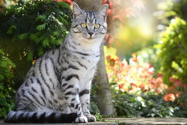 Mačka s pásikmi.jpg