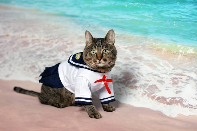 Mačka v námorníckom oblečení pri mori.jpg