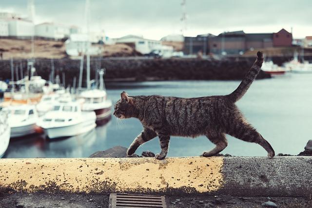 Mačka kráča po múriku v prístave.jpg