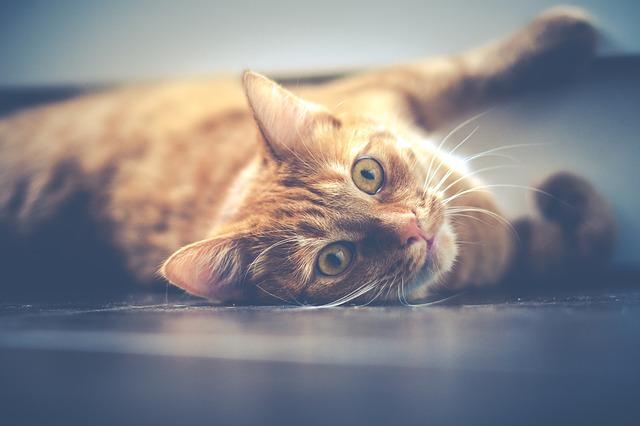 mačka leží na podlahe.jpg