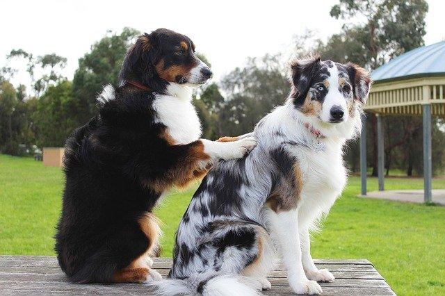 psí priatelia.jpg