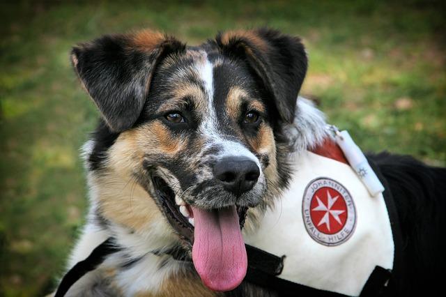 asistenčný pes.jpg
